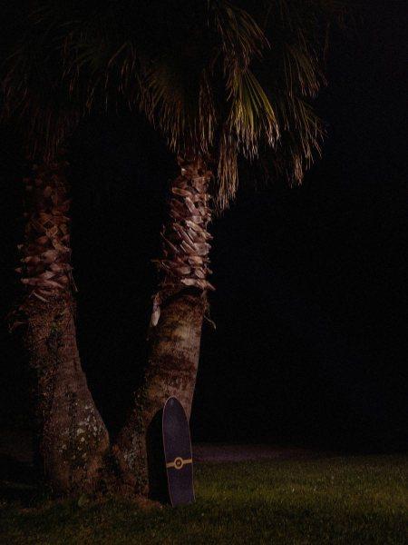 APC_1037-palmeras-skatesurf